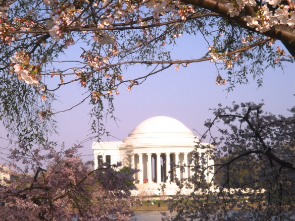 Washington, D.C.'s Jefferson Memorial with Cherry Trees in bloom (c) Diana Belchase